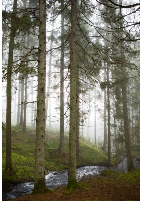 nature | Fine Little Day The Swedish woods