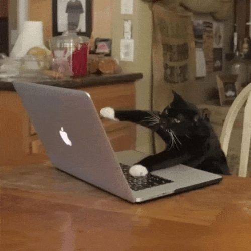 Typing GIF