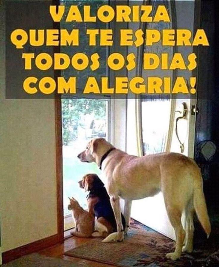 EU VALORIZO MTOO! ❤️❤️❤️ #amoanimais  #amocachorro  #amogato  #gato  #petmeupet  #cachorro