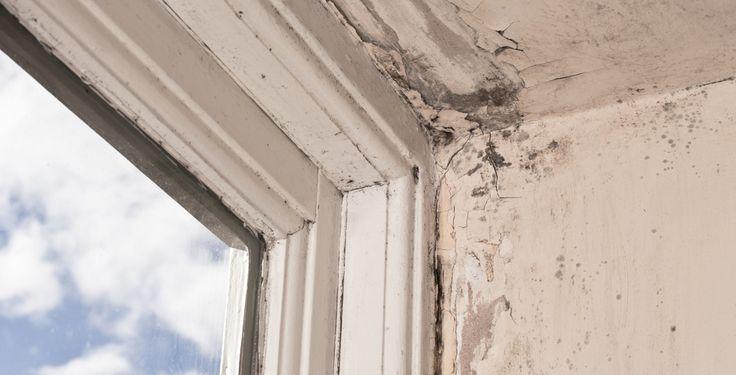 Schimmel in der Wohnung - TK-Expertin Dr. Karin Anderson berät Unikosmos-Userin Laura, die in einer Wohnung Schimmelflecken entdeckt hat. Soll sie trotzdem einziehen?