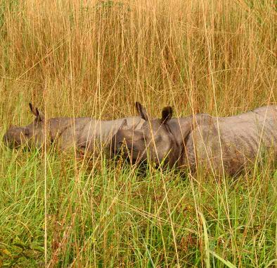 More about the Chitwan National Park. Elephants and Royal Tigers and rhinos and monkeys!