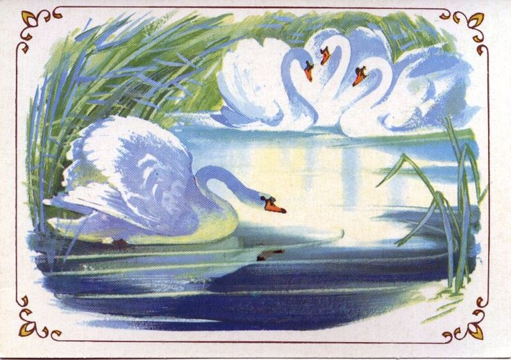 И вдруг из чащи тростника выплыли три чудных белых лебедя. Они плыли так легко и плавно, точно скользили по воде. Утенок узнал этих прекрасных птиц, и его охватила какая-то непонятная грусть.
