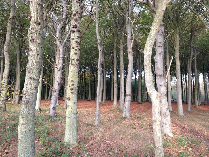 Korsør lystskov