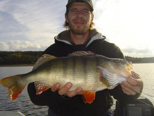 49er #Barsch #angeln #fishing #bass