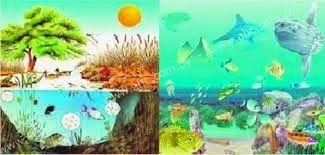 La clase de Laura: Tipos de ecosistemas