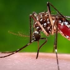 Employers who require employees to travel to regions afflicted by the Zika virus could potentially face legal risks if employees of reproductive age contract the virus while traveling for work. The mosquito-borne virus can cause microcephaly and other birth defects to a fetus which presents a significant health risk to women in early stages of [ ]