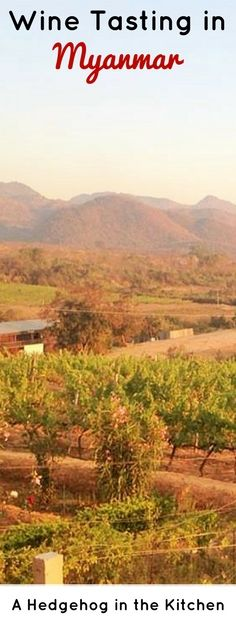 One of the best foodie experiences we've ever had? Drinking wine in Myanmar at Red Mountain Estate! | ahedgehoginthekitchen.com
