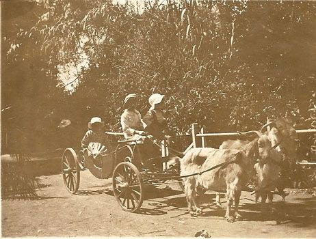 What a great way to travel! The photo is from the Morrell family collection but unfortunately we have no further information.