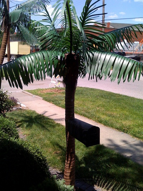 Get your mail delivered in the tropics! Our unique palm tree mailbox is sure to get the neighbors talking! See more at www.xtremelytropical.com
