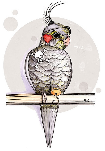 Silvio the cockatiel