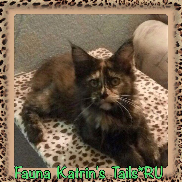 Fauna Katrin's Tails*RU наша выпускница 3 месяца
