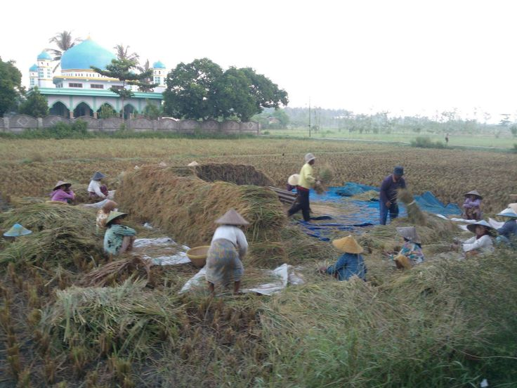 Panen  Harvest
