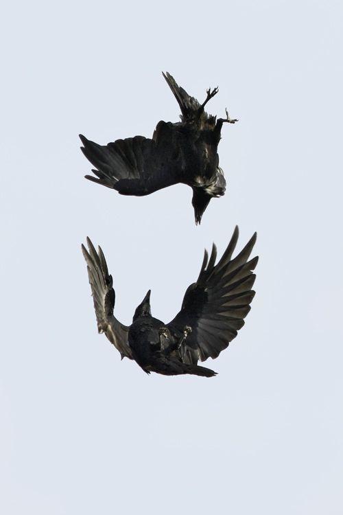 The Birds, Aleksandr Zavatskiy