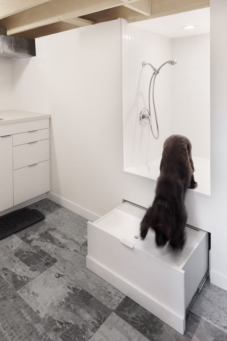 this toronto house features a shower for pets in the bathroom by canadian studio post architecture: architecture bathroom toilet