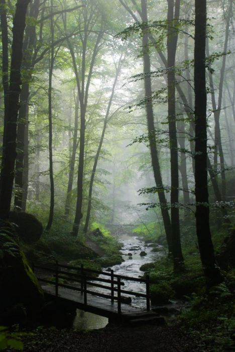 The stream: Magic Forests, Mists, Wood, Enchanted Forests, Misty Forests, Beautiful, Trees, The Bridges, Places