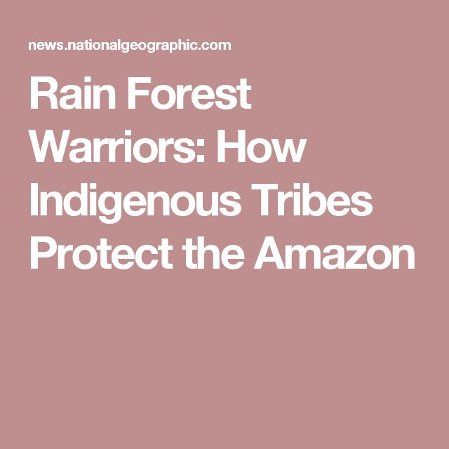 Rain Forest Warriors: How Indigenous Tribes Protect the Amazon