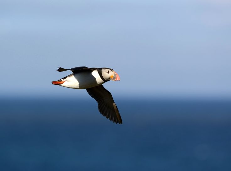 #Migration makes breeding harder for seabirds - Phys.Org: Phys.Org Migration makes breeding harder for seabirds Phys.Org An international…