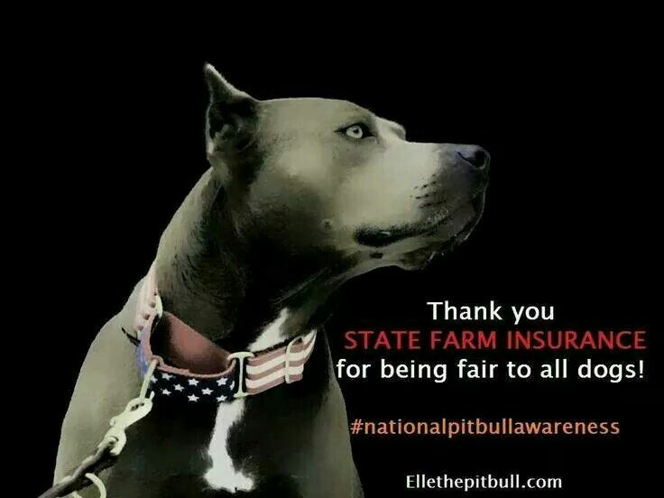 70 best Pit Bulls images on Pinterest | Pit bull, Pets and ...