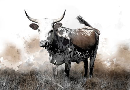 Water Colour 9   This and ALL our other Nguni Canvas prints are on SALE with 30% off - for the WHOLE MONTH of July!   Shop online at NguniGalore.com/birthday-sale/ - Delivery is FREE to anywhere in South Africa!