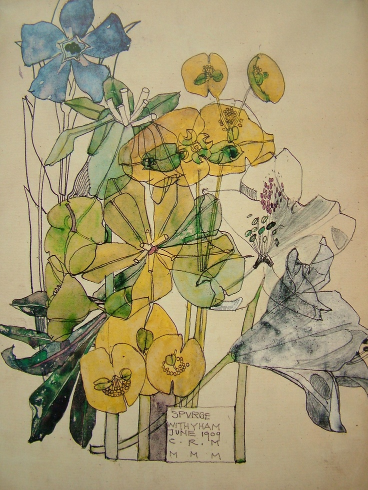 Botanical illustration by Charles Rennie Mackintosh