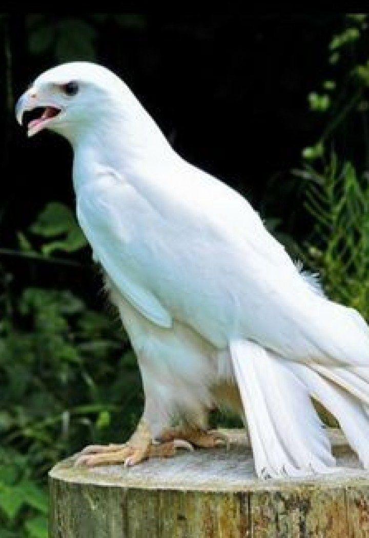20 rare albino animals