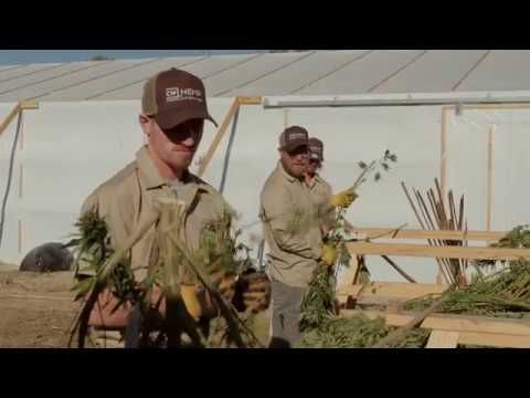 CW Harvest