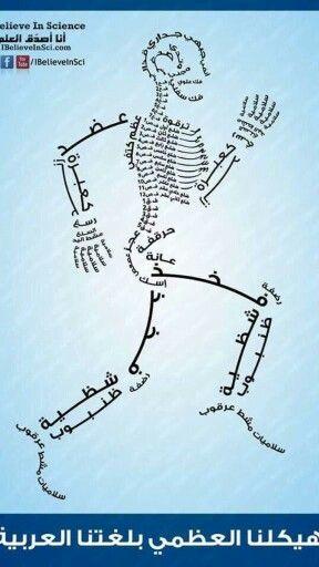 أعضاء الجسم
