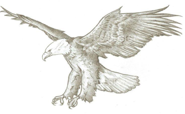 Aquila - disegnato a mano su supporto cartaceo http://www.cs4rt.com/portfolio  #disegno #carta #Matita #draw
