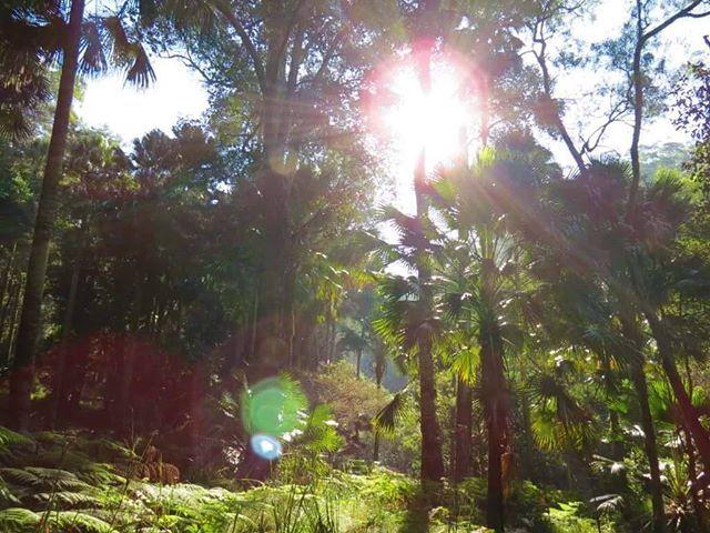 Breathtaking Rainforest @RoyalNationalPark