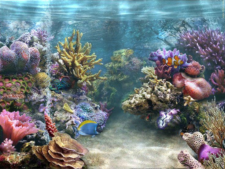 Cool Free Moving Screensavers | aquarium, fish, screensaver, simaquarium