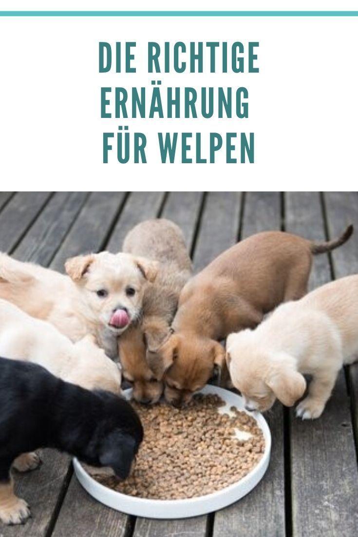 Fifi Allein Zuhaus Trennungsangst Beim Hund Behandeln Lumpi4 De Hundemagazin In 2020 Trennungsangst Hunde Angst