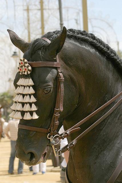 Jerez de la Frontera Horse Festival by jennyfotos, via Flickr