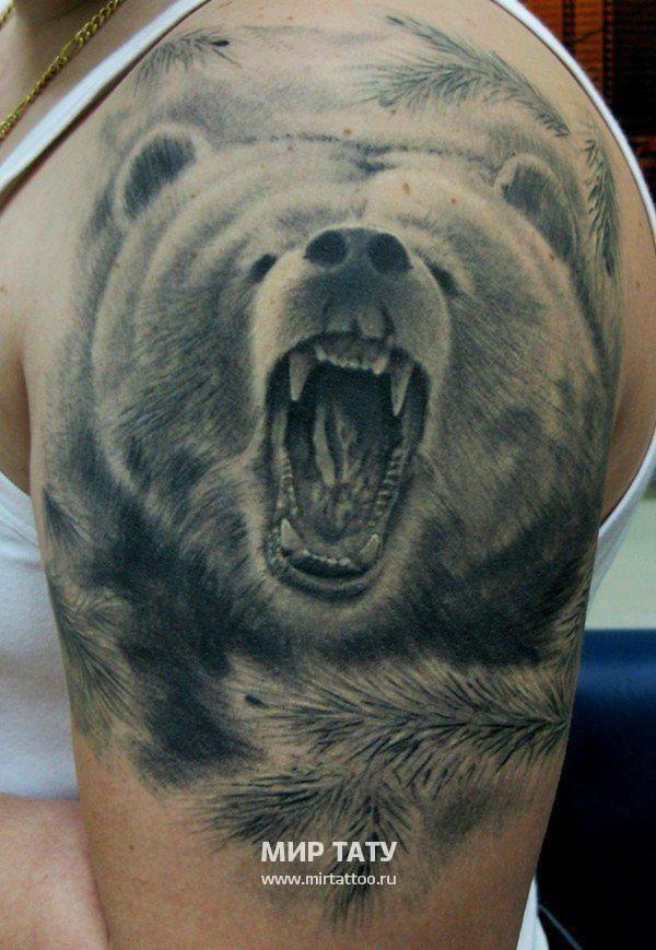 тату медведь: 21 тыс изображений найдено в Яндекс.Картинках