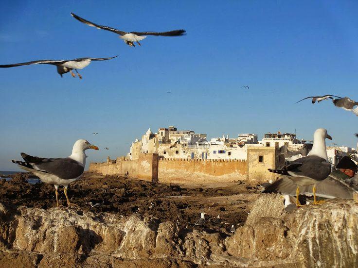 Essaouira - Maroc. © photo Copyright N. Philippe