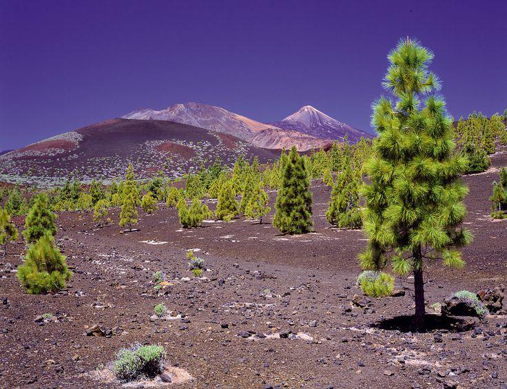 Arenas Negras,Tenerife, Islas Canarias