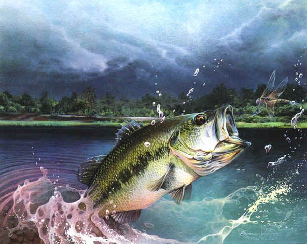 Fish paintings paintings paintings of animals for Bass fish images