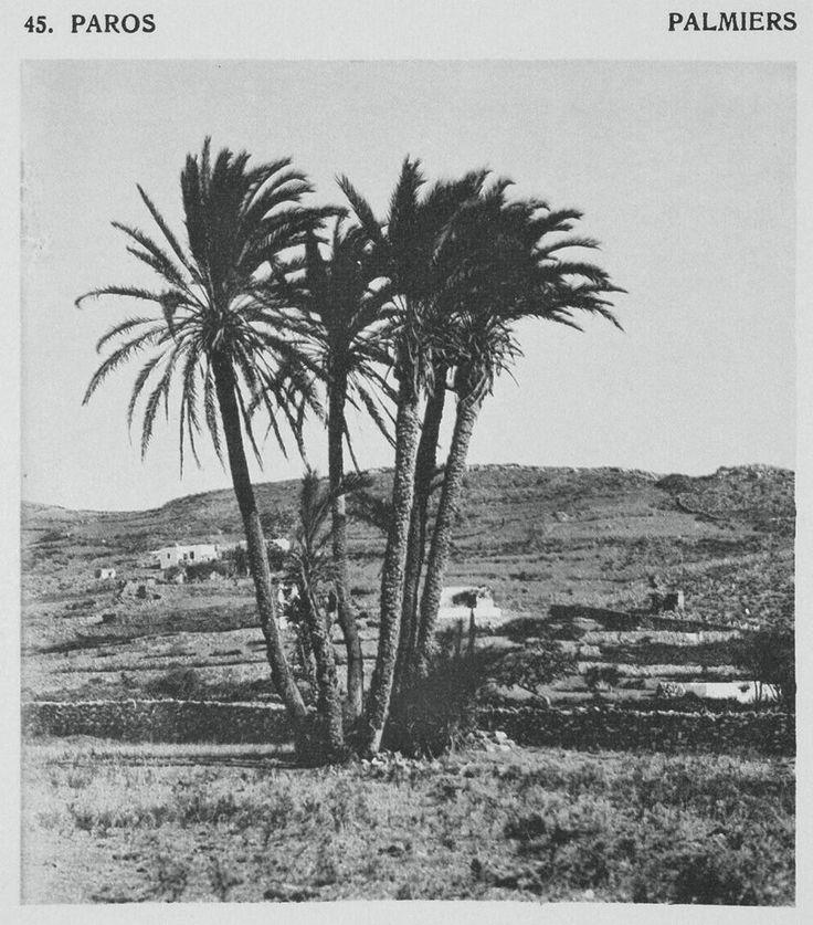 FREDERIC BOISSONNAS - BAUD BOVY ΠΑΡΟΣ - 1919 - ΦΟΙΝΙΚΕΣ ΣΤΗΝ ΠΑΡΟ