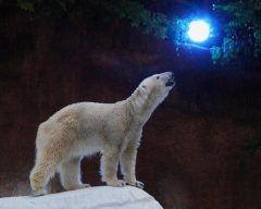 大阪の天王寺動物園でハロウィンナイトZOOが開催されますよ 閉園時間を時まで延長し日没後の動物たちの様子も観察できるイベントになっています 夜行性の動物が活発に動きまわる様子を観察してみてね tags[大阪府]
