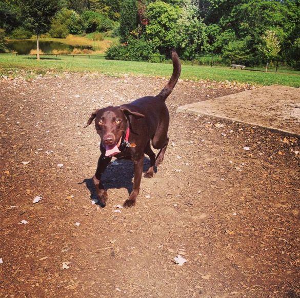 Liberty Dog Park - Liberty, MO - Angus Off-Leash #dogs #puppies #cutedogs #dogparks #liberty #missouri #angusoffleash
