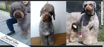 #GroomingAllDay:  Estilos de cortes que pode aplicar no mesmo cão, ...