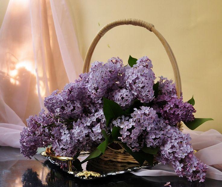 http://poze.yes-da.com/t66p50-aranjamente-florale