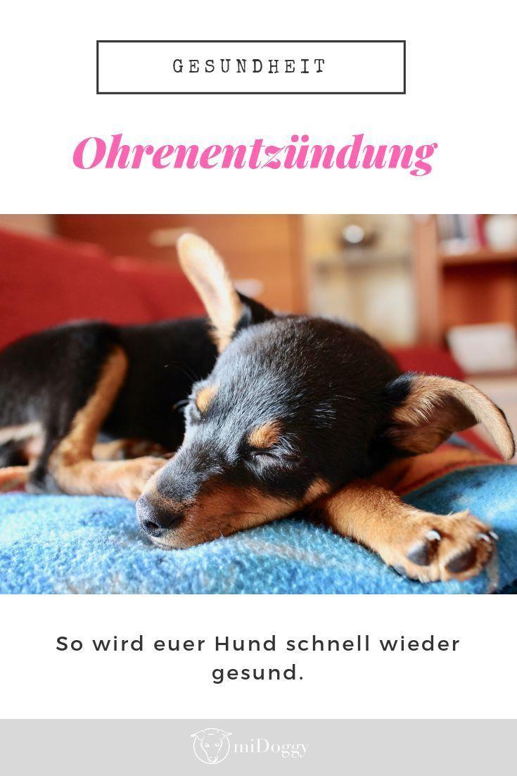 Thema Hundeohren Teil2 Ohrenentzundung Midoggy Community Hunde Haustierpflege Hund Und Katze