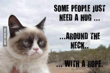 #Grumpy #cat