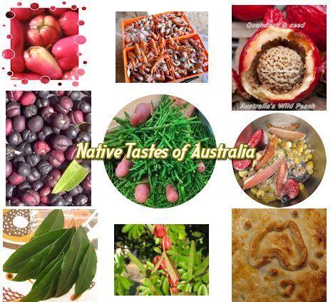 bush tucker recipes