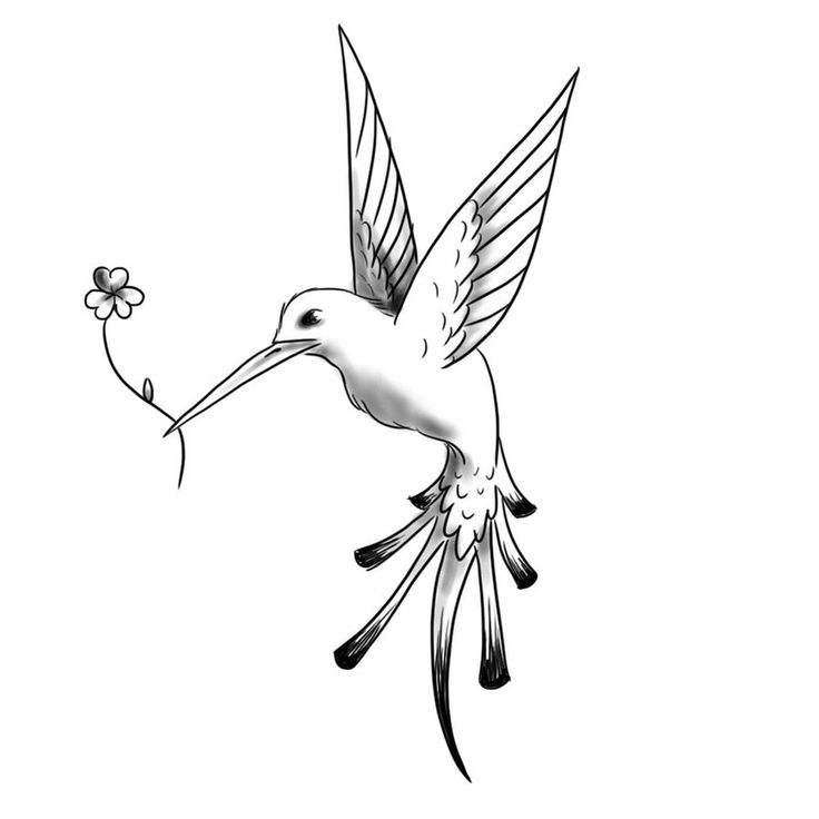 hummingbird tattoos | Hummingbird Tattoo Black And White