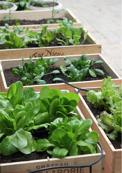 Zaaien in wijnkistjes #DIY #vegetablegardening #garden #moestuin