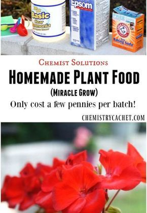 Easy Homemade Plant Food (Miracle Grow) - Easy homemade plant food that is SO affordable AND it's actually effective!