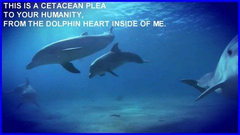 Embedded image permalink SnowLeopardLass @SnowLeopardLass  ·  3h 3 hours ago @QuadFins4Fun @Foxewise #Tweet4Taji ► This is a CETACEAN PLEA to your humanity from The #dolphin Heart Inside Of Me: http://youtu.be/I0PDn8MBzzc