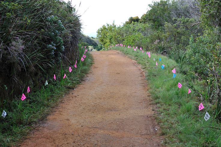 Flags where each tree was planted
