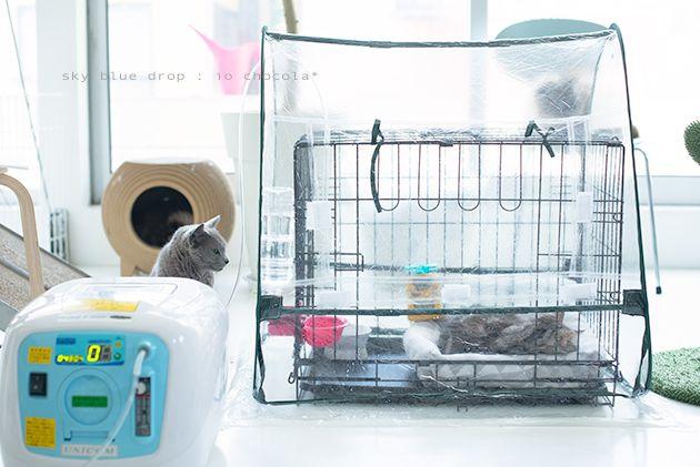 酸素室 手作りしてみた Sky Blue Drop 14ニャンズトネコハウス 簡易トイレ 家庭用 猫の健康
